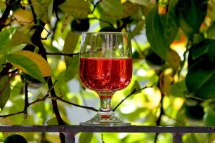 Wine: New to Science in Microbiology